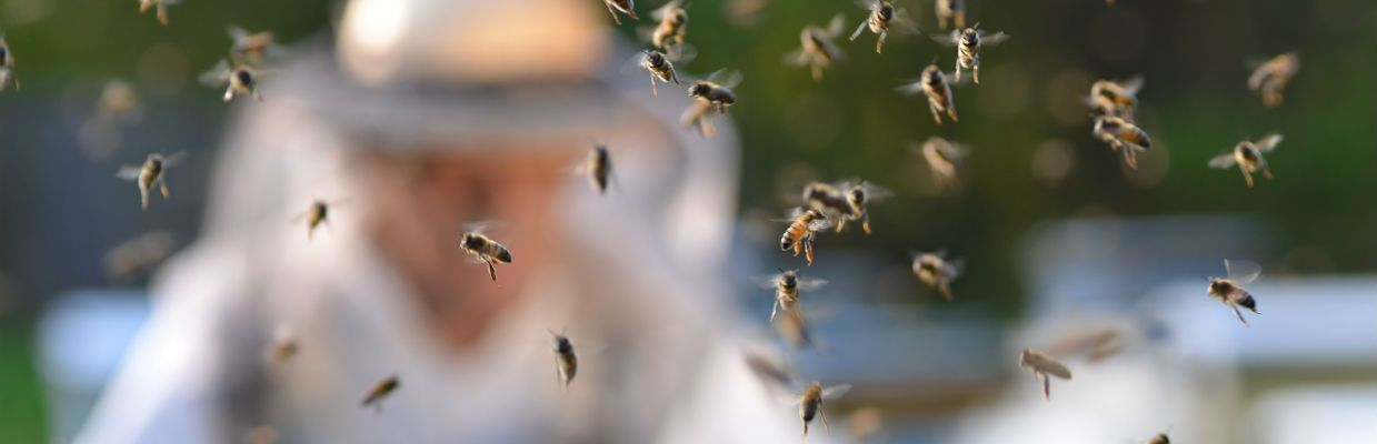 Professional and Emergenct Bee, Beehive, Bee Swarm Removal for Orange County