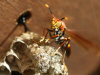 services wasp removal