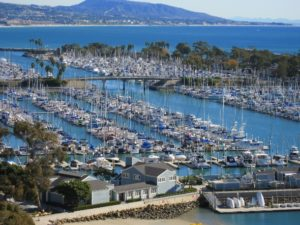 Dana Point Bee Removal Services