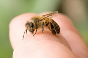 The Bee Man - Bee Safety Tips