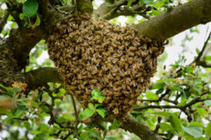 Mission Viejo Bee Removal - The Bee Man