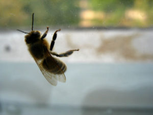 Rancho Mission Viejo Bee Removal - The Bee Man