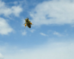 Rancho Santa Margarita Bee Removal - The Bee Man