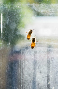 San Clemente Bee Removal - The Bee Man