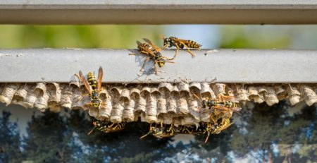 How to Handle Hives and Swarms