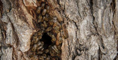 beehive colony