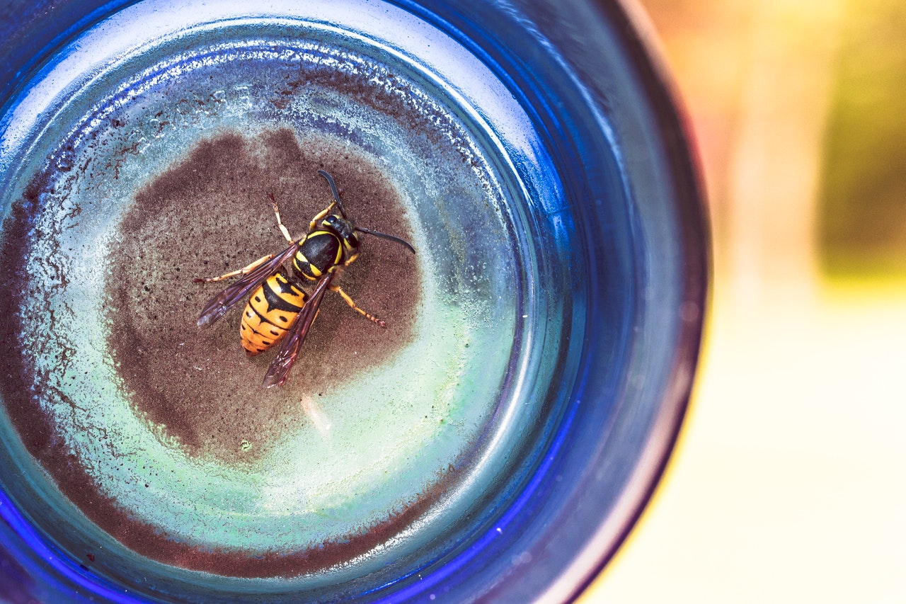 animal-glass-insect-bottle-561