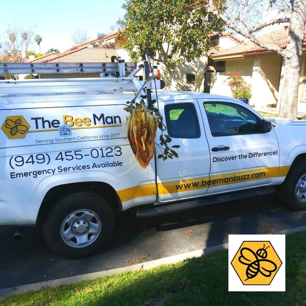 Infestations-in-Your-Home-Contact-Bee-Removal-Orange-County-Services