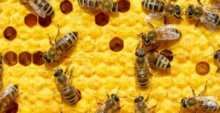 Types-of-Bees-According-to-Bee-Removal-Experts-in-Orange-County.