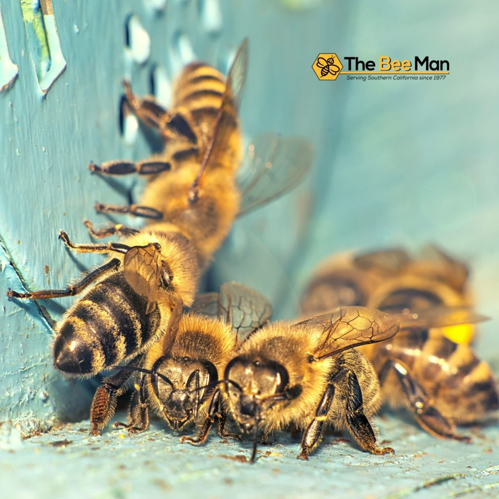 Don't-Try-to-Handle-Stinging-Insects-Alone-Call-Bee-Removal-Experts-in-Orange-County