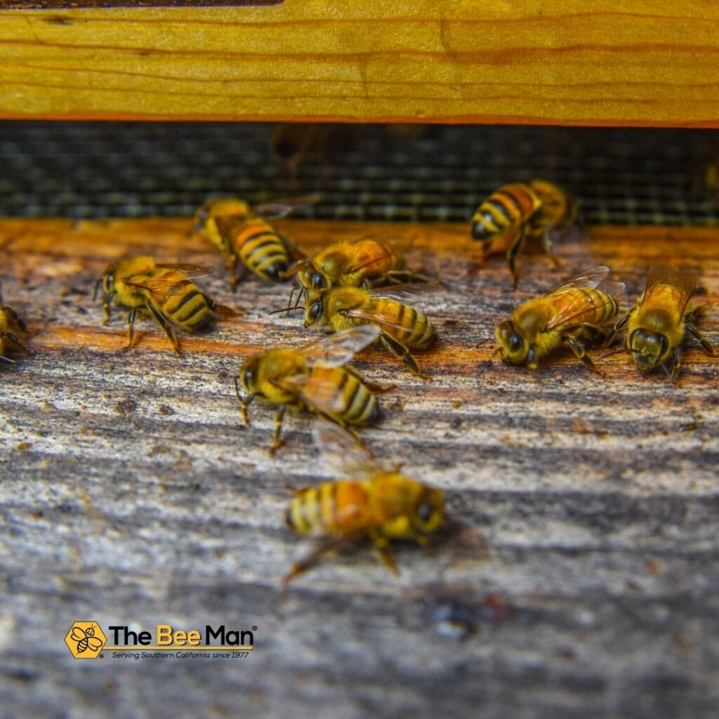 Bee-Removal-Experts-Can-Solve-Your-Bee-Infestation