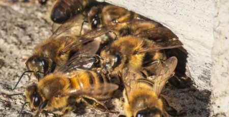 Call-Bee-Removal-Services-to-Safely-Remove-an-Infestation-Wherever-You-Are