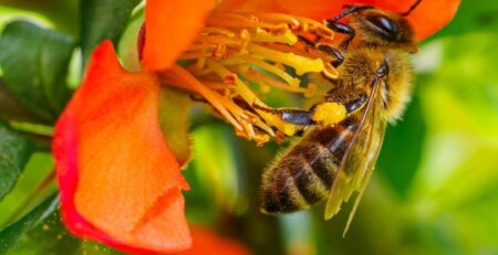 A-Bee-and-Wasp-Removal-Expert-Is-Needed-If-You-Find-A-Hive-or-Infestation