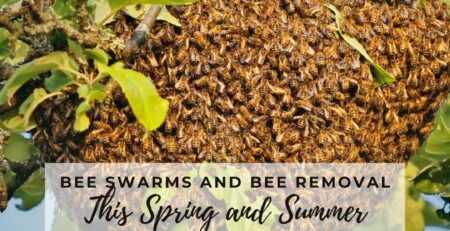 Bee-Removal-Services-Can-Safely-Take-Care-of-Bee-Swarms-in-Your-Community