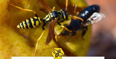 Reasons-bees-and-wasps-would-get-aggressive-according-to-bee-and-wasp-removal-experts