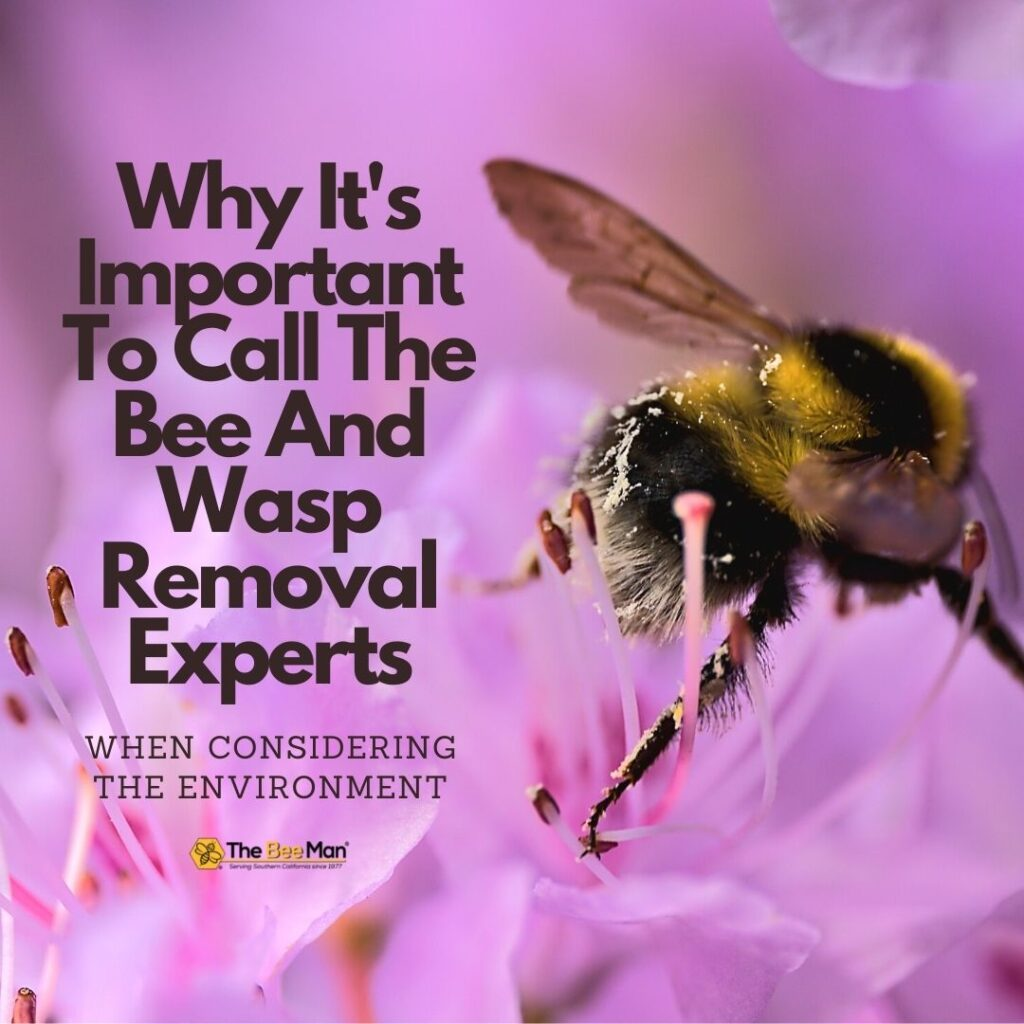 Calling-bee-and-wasp-removal-professionals-is-important-for-preserving-the-ecosystem